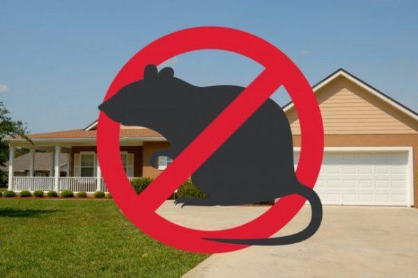 Dératisation La Ciotat : comment se débarrasser définitivement des rats ?